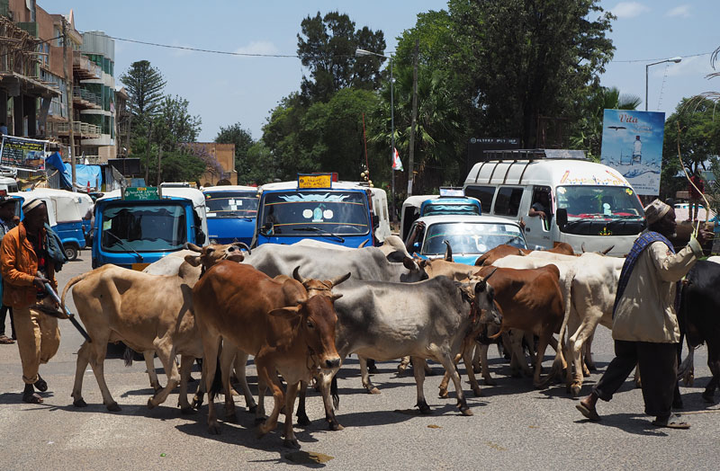 Traffic jam on the main road in Harar, eastern Ethiopia.