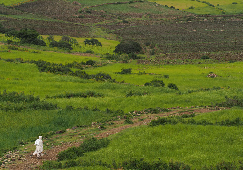 A woman walks through fields of teff, Ethiopia's staple grain, near Axum.