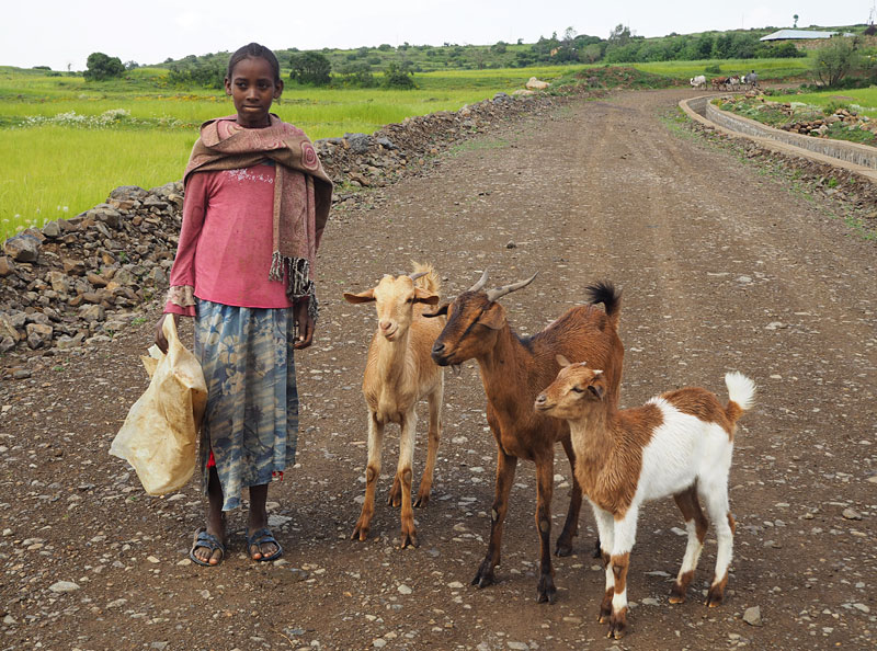 A girl and her goats, Axum, northern Ethiopia.