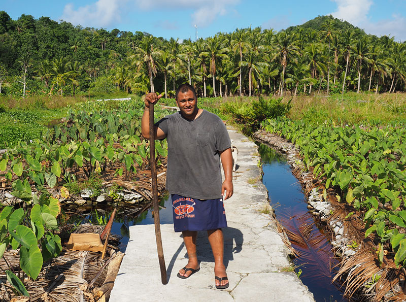 Peter Taliva'a in his taro plantation on Aunu'u Island