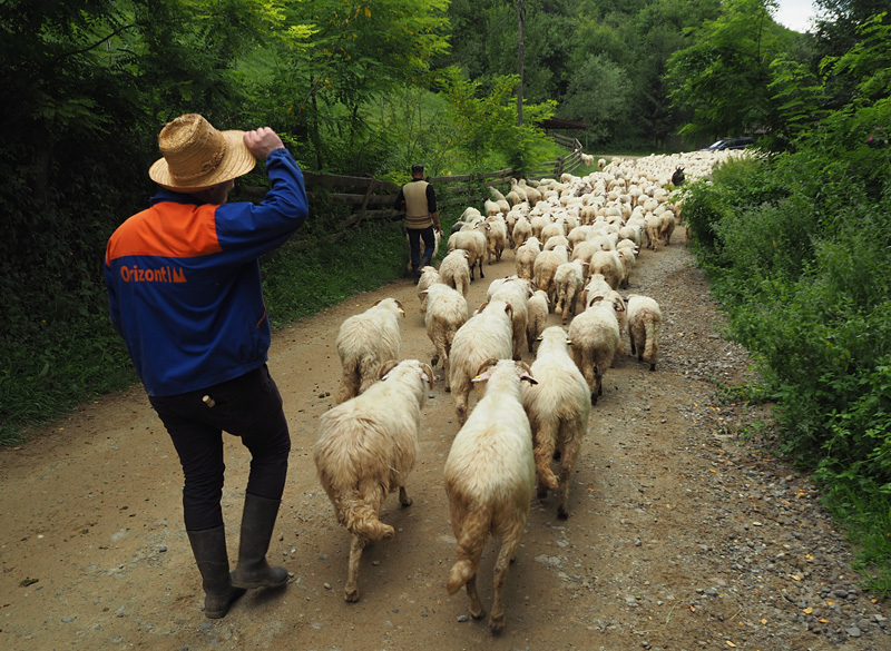 Marius and his flock head for the hills