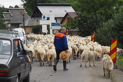 Traffic jam on the main road to Sighetu Marmației