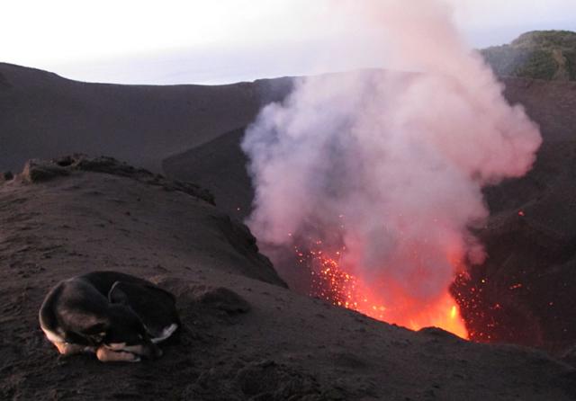 A dog takes a nap atop an active volcano on Tanna Island