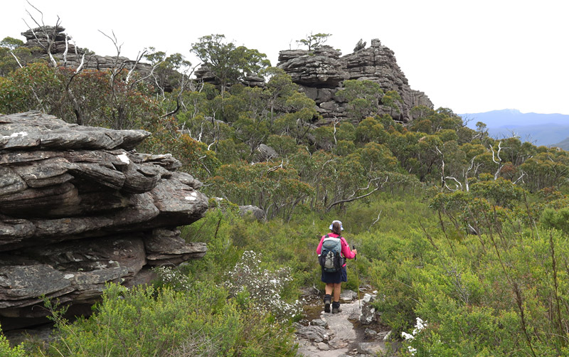 Auswalk guide Marie Killeen on the track up Mt Rosea
