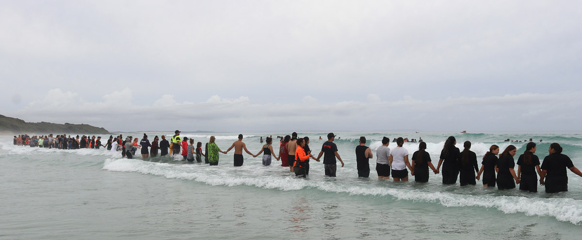 Volunteers form a human chain at Rarawa Beach to stop a pod of refloated whales returning to shore