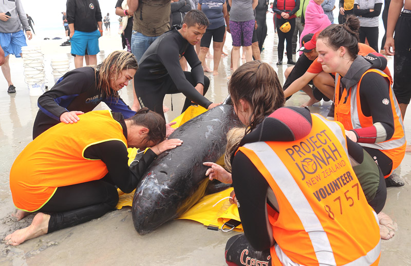 Rescuers bid a tearful farewell to a pygmy killer whale after hopes of saving it are dashed