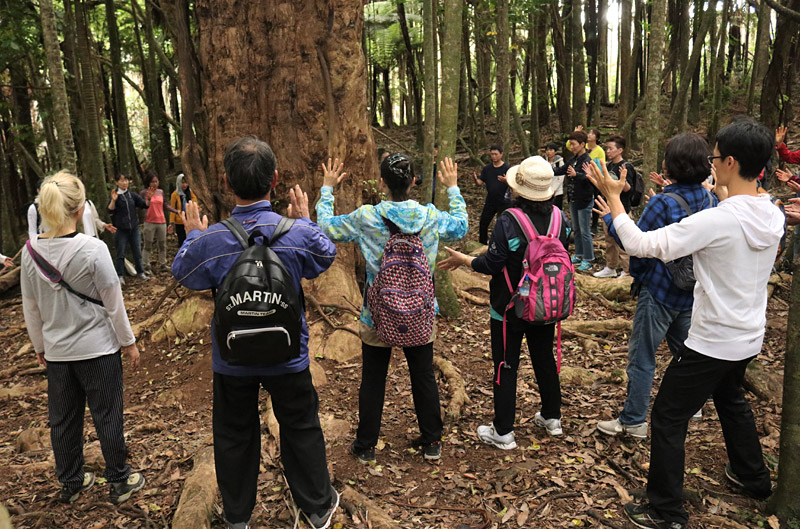 A Meditation Tours group pays homage to an ancient puriri tree