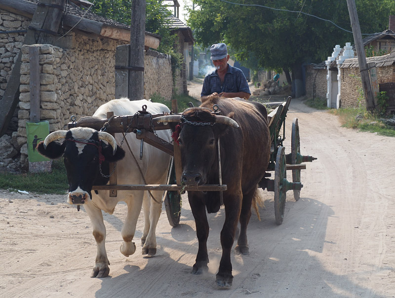 A cart pulled by oxen plods down the main street of Butucen