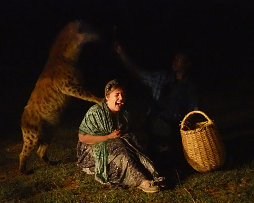 "A tourist gets a ""back massage"" from a hyena"