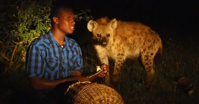 A beastly back rub: Hanging out with the hyenas of Harar