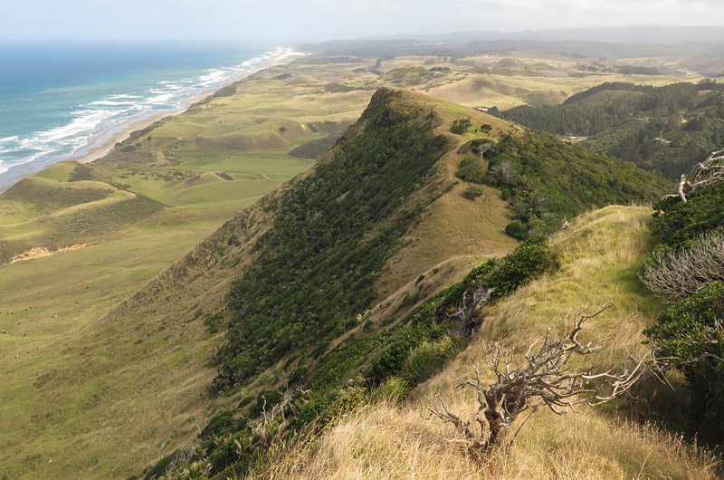 The walk up the ridge to Maunganui Bluff is the most spectacular part of the trail
