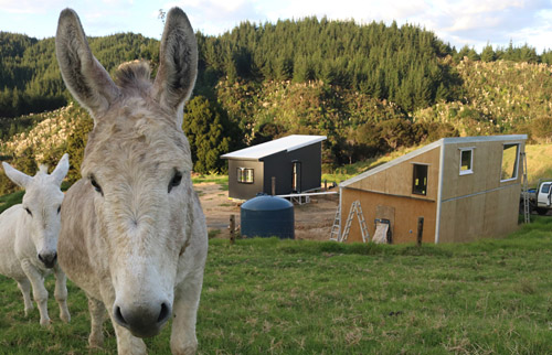 A pair of donkeys, the couple's only neighbours, check out the building site