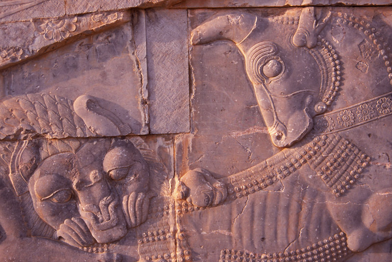 A lion attacks a bull in a 2500-year-old carving at Persepolis