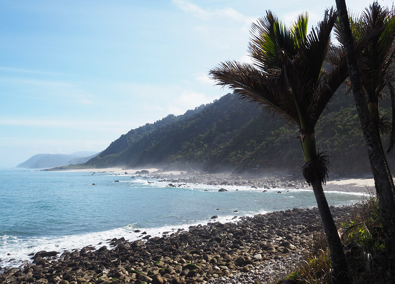 Nikau palms frame a stretch of wild west coast