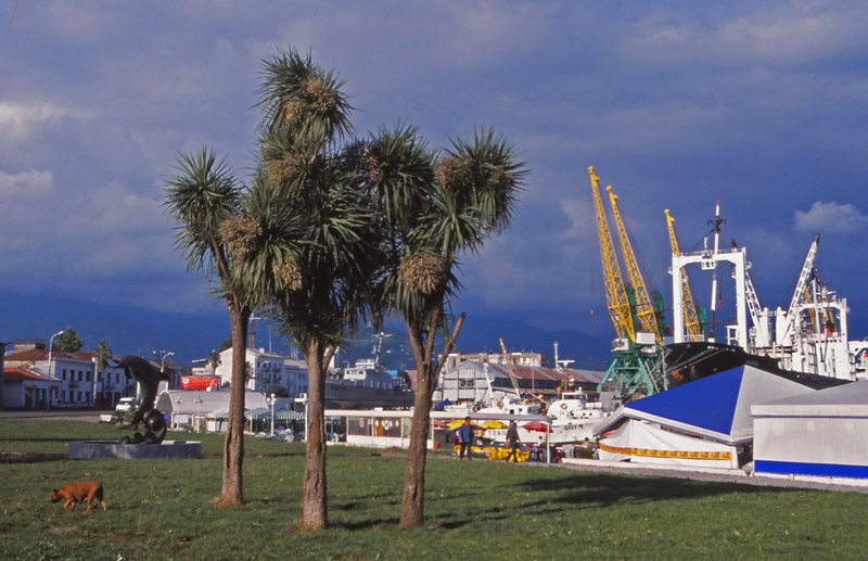 New Zealand cabbage trees (tī kōuka) thrive at Batumi's Black Sea port