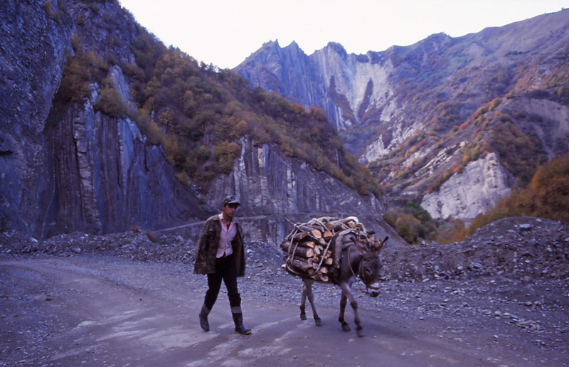 A young man collects firewood with the help of his donkey