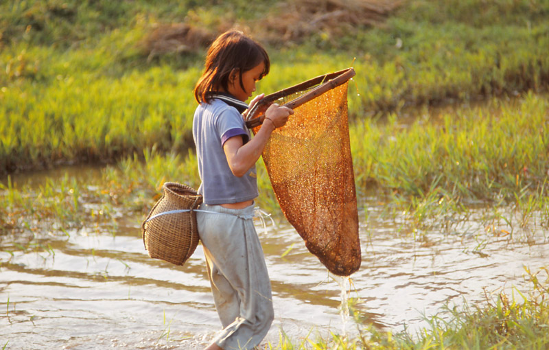 A girl nets fish in Vang Vieng