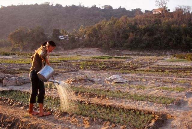 A young woman waters crops on the banks of the Mekong River in Luang Prabang