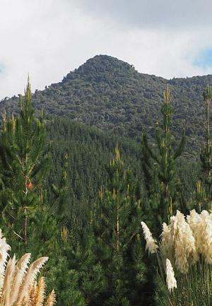 Tutamoe's well defined peak offers fabulous views.