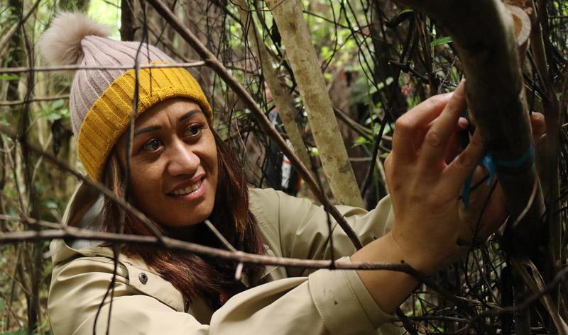 """Miss Kihi"" Ririnui releases a giant wētā in the bush of Moturua Island"