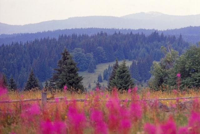 Springtime in the Šumava Mountains of South Bohemia