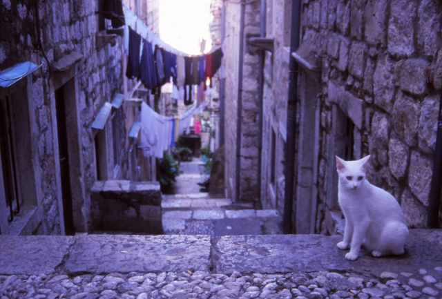 Croatia, 1999: A cat hangs out in an alley of the feline-friendly city of Dubrovnik. Photo: Peter de Graaf
