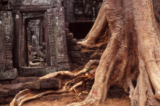 Banteay Kdei, a late 12th century Buddhist temple, is quiet and overgrown