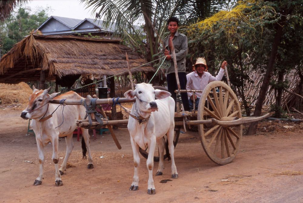 Rural transport in Cambodia has changed little in centuries
