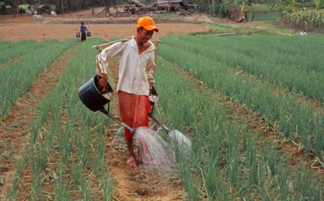 A boy waters dry-season crops near Battambang